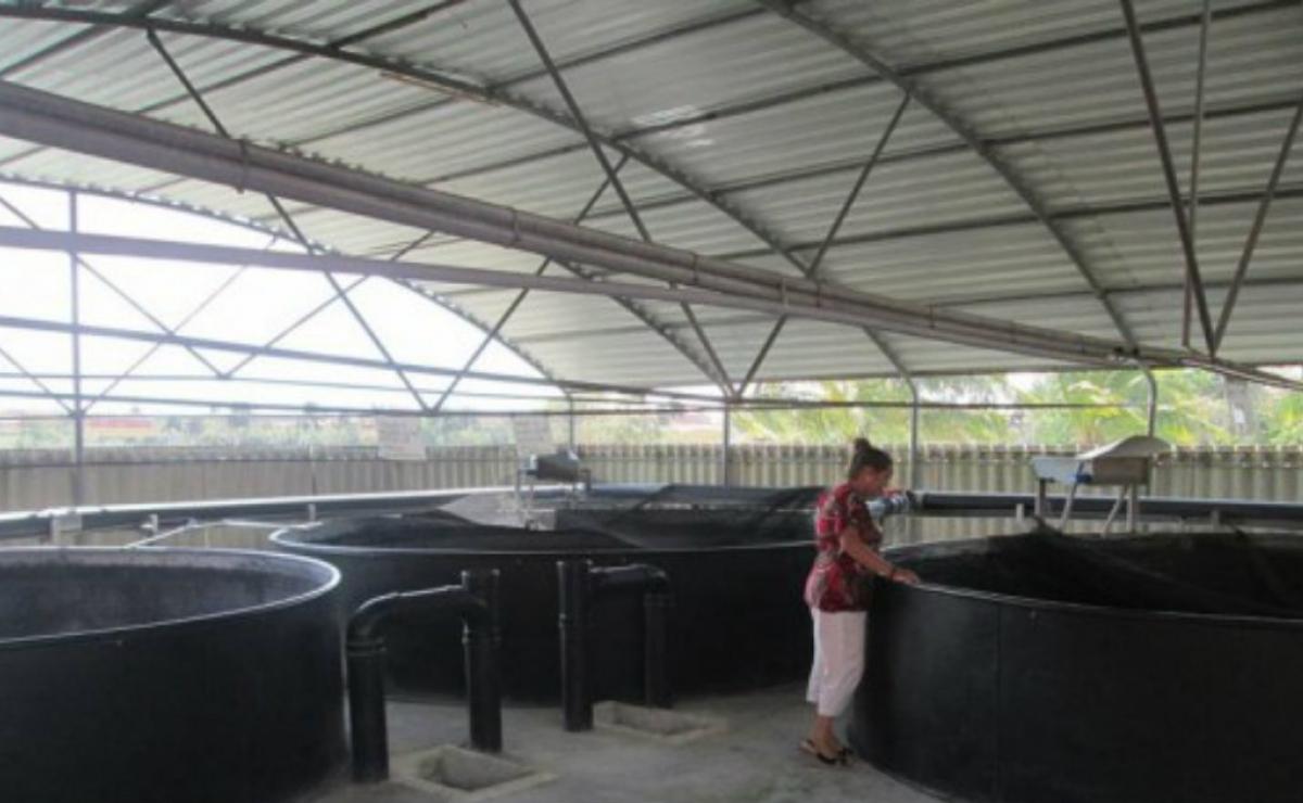 Cuba aplica tecnología holandesa para incrementar la producción acuícola